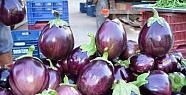 Silifke'de Her Biri 1,5 Kilo Olan Patlıcan...