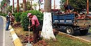 Süs Palmiyelerin Bakıma Alındı