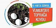 Toprağa Yumurta Koyun 6 Hafta Sonra Bakın Ne Oluyor