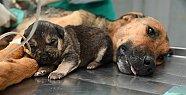 Trafik Kazasında Yaralanan Köpeğe Takdirlik