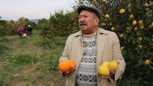 Zam Şampiyonu Limonun Üreticisi Dertli